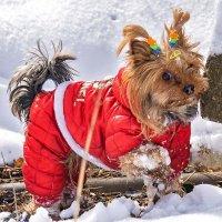 Любительница снега... :: Арина