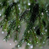 Дождь :: Ольга Митрофанова