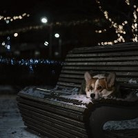 Маленький пес в большом городе :: Анна Пушина