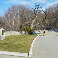 Железноводск. Парк отдыха. 8 марта :: Николай Николенко