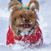 Собачья радость... :: Арина