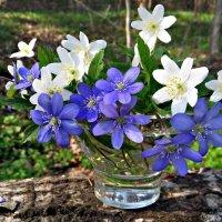 Букетик весны :: Ольга Митрофанова