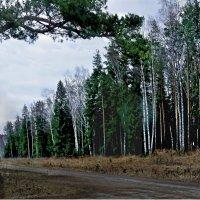 Дорожкой к лесу.... :: Юрий