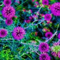 Баяноульские цветы. :: Штрек Надежда