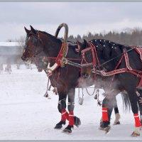 Уставшие кони. :: Vadim WadimS67