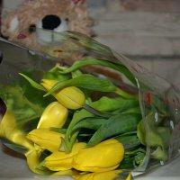 Жёлтые тюльпаны. :: Михаил Столяров