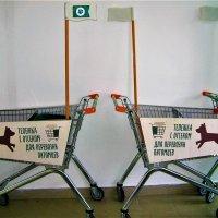 Добро пожаловать или с собачками вход разрешен! :: Василий