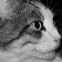 Чёрно-белое фото :: Liudmila LLF