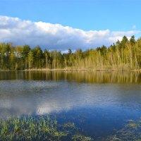 Весна у озера :: Larisa Simonenkova