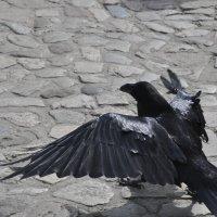 Ворон - траурные перья, и ... больше ничего.(Эдгар По) :: Борис