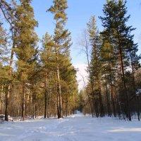 Лесные угодья . Март . :: Мила Бовкун