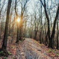 На рассвете в лесу :: Юрий Стародубцев