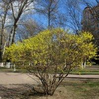 Весна на бульваре :: Нина Бутко