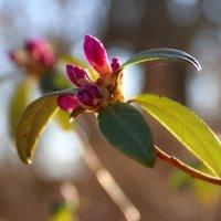 Потому что весна... :: Любовь С.