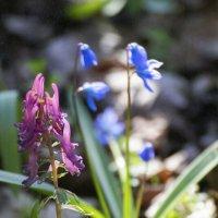 Лесные цветы :: Антуан Мирошниченко