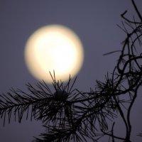 Луна задремала на небе :: Елена Якушина