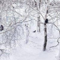 зима :: Любовь