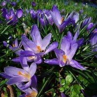 Ах, до чего она дурманит, Все та же, вечная весна! :: Galina Dzubina