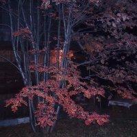 Осенний вечер :: Борис