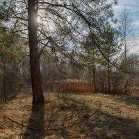 весенний лес :: Алексей Клименко