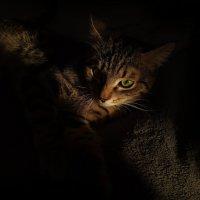 Взгляд из темноты :: Наталья Ерёменко