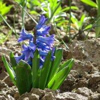 Колдуй, Весна! Твой почерк так изящен, ты даришь море сказочных цветов... :: Татьяна Смоляниченко