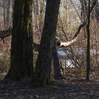 Весна в парке :: Aнна Зарубина