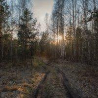 Весенняя дорога :: Алексей Клименко