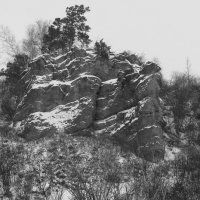 И на камнях растут деревья!!! :: Радмир Арсеньев