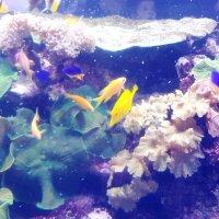 В океанариуме :: Самохвалова Зинаида