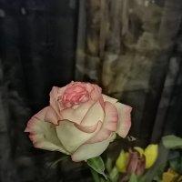Роза :: ОКСАНА ЮРЬЕВНА ШВЕЦ