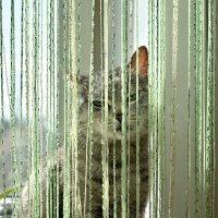 Кошка маша :: Владимир