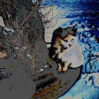 Жил,да был...белый кот. Март. :: Хлопонин Андрей Хлопонин Андрей