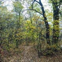 Новомосковский лес :: Антуан Мирошниченко