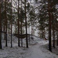 В мартовском лесу. По ледяным тропинкам. :: Михаил Полыгалов