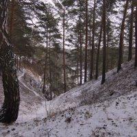 В прибрежном лесу  Каменки-речки. Март 2020. :: Михаил Полыгалов