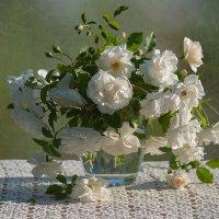 Белые розы :: Елена Ахромеева
