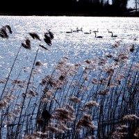 Лебединое озеро. :: Vladimir Semenchukov