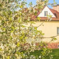 Домик с окнами в сад... :: bajguz igor