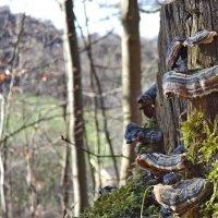 Сбор грибов, с камерой :: Heinz Thorns