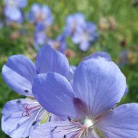 Цветы :: lyalla k