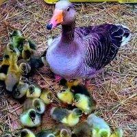 Щаслива матуся :: Степан Карачко