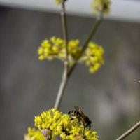 Весна :: Яна Калтурова