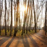 Весенний вечер в Нескучном саду :: Михаил Танин