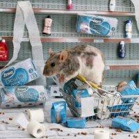 На злобу дня: Туалетная бумага и гречка - наше все! :: Татьяна Попова