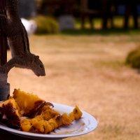 it's a chipmunk and pineapple :: Sasha K