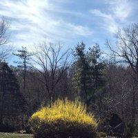 Ранняя весна :: Елена