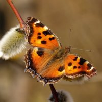 и снова бабочки 25 - вчерашний улов :: Александр Прокудин