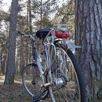 Велосипед :: Tatjana