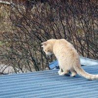 Персик поел сушняка и смотрит на моих котов :: Вадим